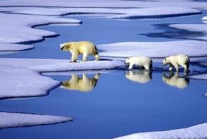 white_bears.jpg